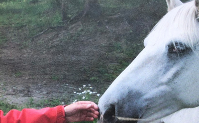 Ann Kern-Godal's Memorial Fund for Horse-Assisted Therapy is open for international competition.