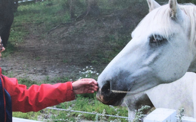 Ann Kern-Godal's memorial fund for Horse-Assisted Therapy announces scholarship recipients of 2019